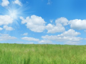 New Blue Sky and Fresh Green Grass